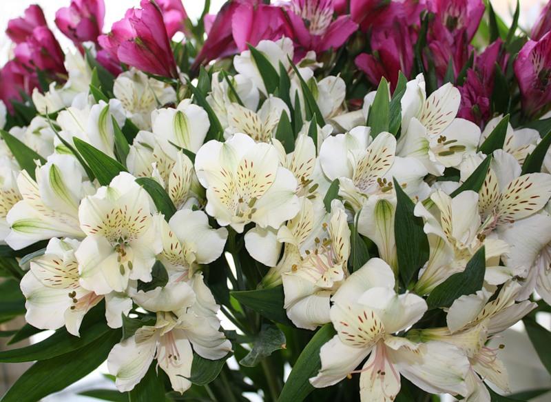 Букетные цветы названия и фото на даче, продажа цветов кинешме