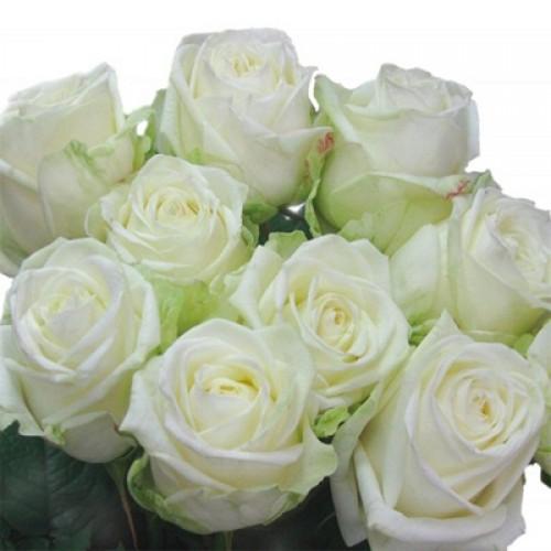 Бело-зелёные розы фото